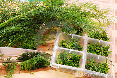 Freezing the dill for winter