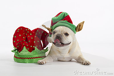French Bulldog Elf