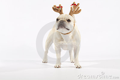 French Bulldog Reindeer