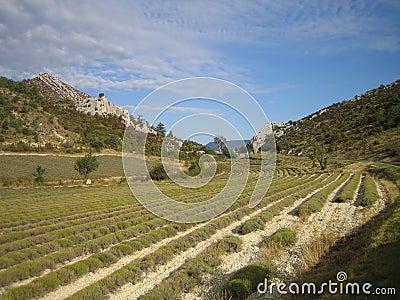 French Farmland