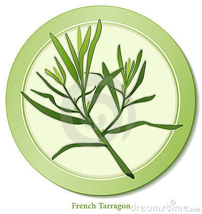 French herb tarragon