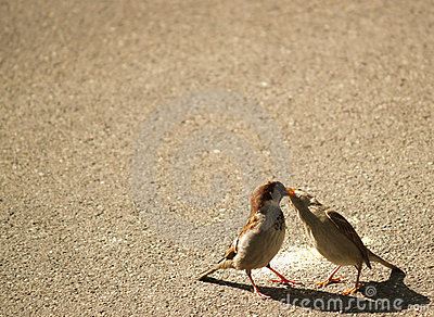 French kissing sparrows
