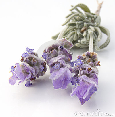 Free French Lavender Stock Images - 2131794