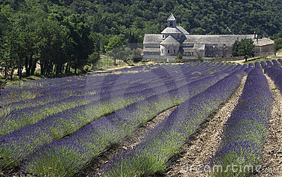 French Monastery and Fields of Lavender
