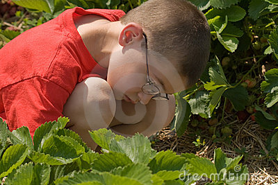 Fresas de la cosecha del muchacho
