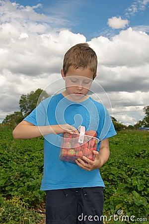 Fresas lindas de la cosecha del muchacho en campo, al aire libre