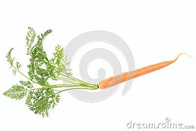 Fresch carrot