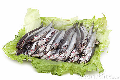Fresh anchovies on a try.