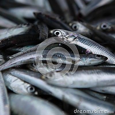 Fresh Anchovy / Sardines