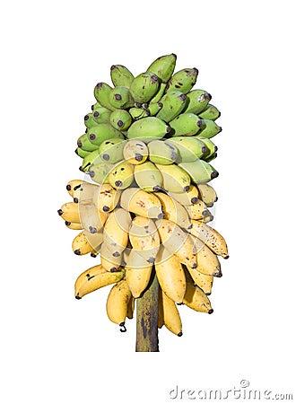 Free Fresh Bananas On Stock Royalty Free Stock Photos - 55830258