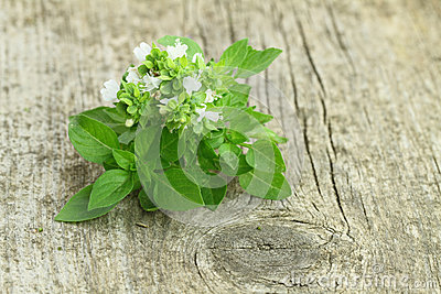 Fresh Basil Royalty Free Stock Images - Image: 26204619