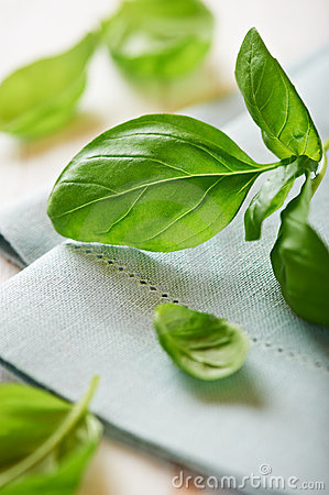 Fresh basil on blue napkin