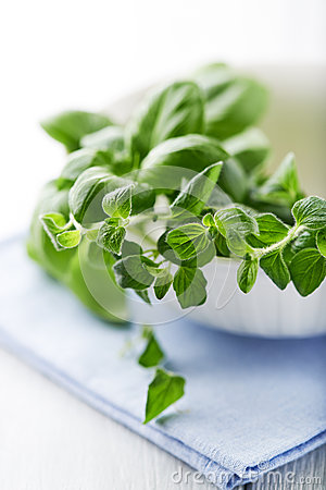 Fresh basil and oregano