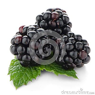Free Fresh Berry Blackberry Stock Images - 26164854