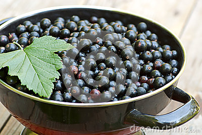 Fresh blackcurrant in bowl