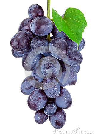 Free Fresh Blue Grapes Hanging Isolated On White Background Royalty Free Stock Photos - 61408358
