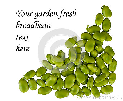 Fresh broad bean border, frame, corner, isolated
