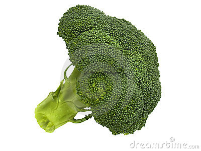 Fresh broccoli floret on white