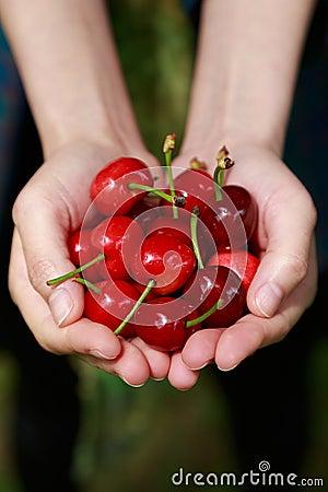 Free Fresh Cherries Stock Images - 30945244