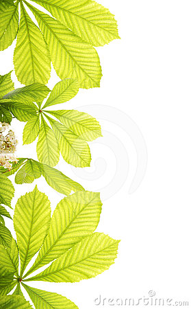 Free Fresh Chestnut Leafs Stock Image - 24424241