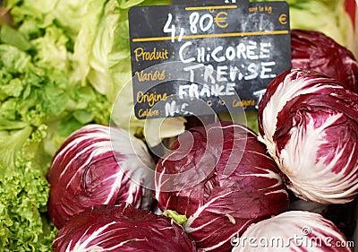 Fresh chicory vegetables