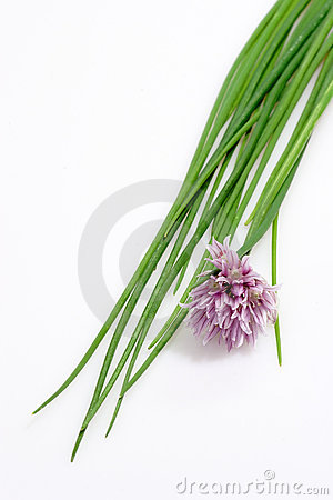 Free Fresh Chive Royalty Free Stock Images - 4187009