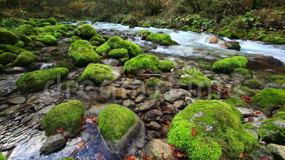 Fresh clean river from the mountains in fall. Fresh clean river Kamniska bistrica from mountains stock footage
