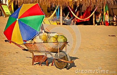 Fresh Coconuts for Sale at Mexican Beach