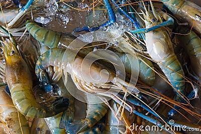 Fresh crawfishes