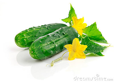 Fresh cucumber fruits with green leaves
