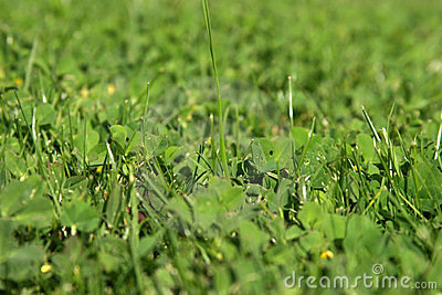 Fresh cut green grass close up for backgrounds