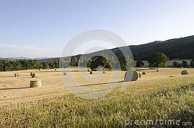Fresh Cut Rolls Of Hay In Western Field Royalty Free Stock Images - Image: 25564859