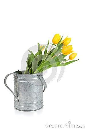 Fresh cut yellow tulips