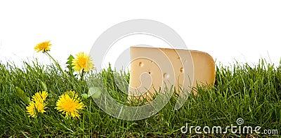Fresh dutch cheese