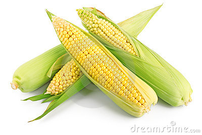 Fresh ear of corn