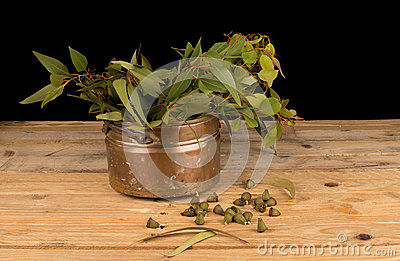 Fresh eucalyptus on table