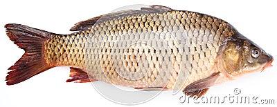 Fresh fish carp