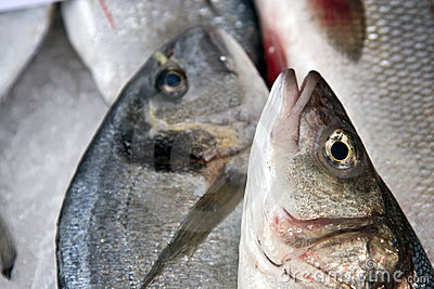 Fresh fish closeup