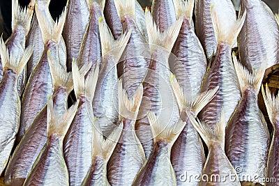 Fresh fish drying