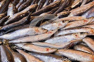 Fresh fish at the marketplace