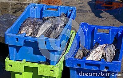 Fresh fish in plastic crates on harbour floor