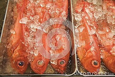 Fresh fish sit on ice