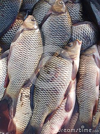 Free Fresh Fish2 Royalty Free Stock Photos - 542328