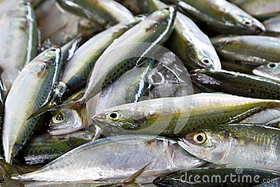 Fresh fishes on the market