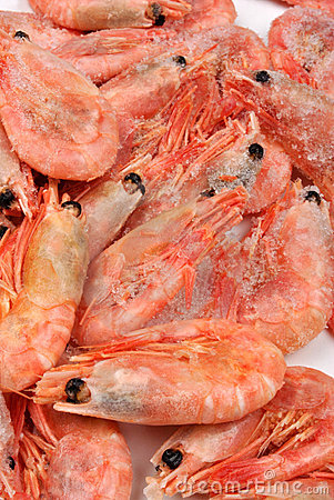 Free Fresh Frozen Organic Prawns With Ice Stock Photography - 13427902