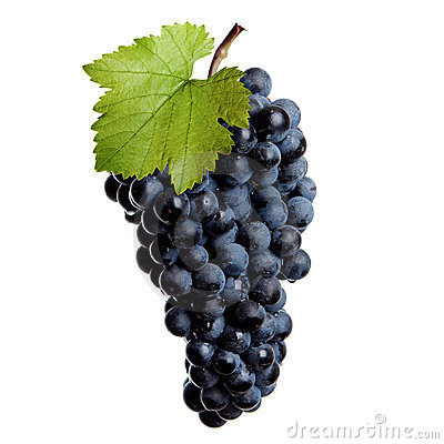 Fresh grapes of red wine