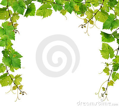 Free Fresh Grapevine Border Stock Photo - 15277180