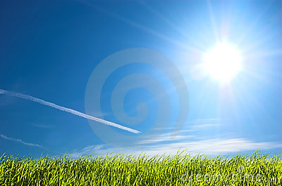 Fresh grass and blue sunny sky