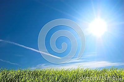 Fresh grass and blue sunny sky