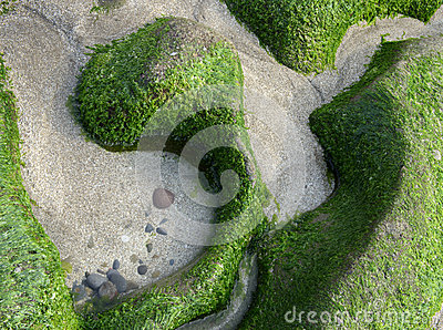 Fresh and green algae on a beach